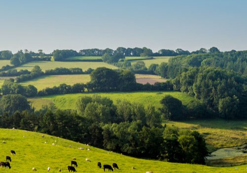 Countryside-view